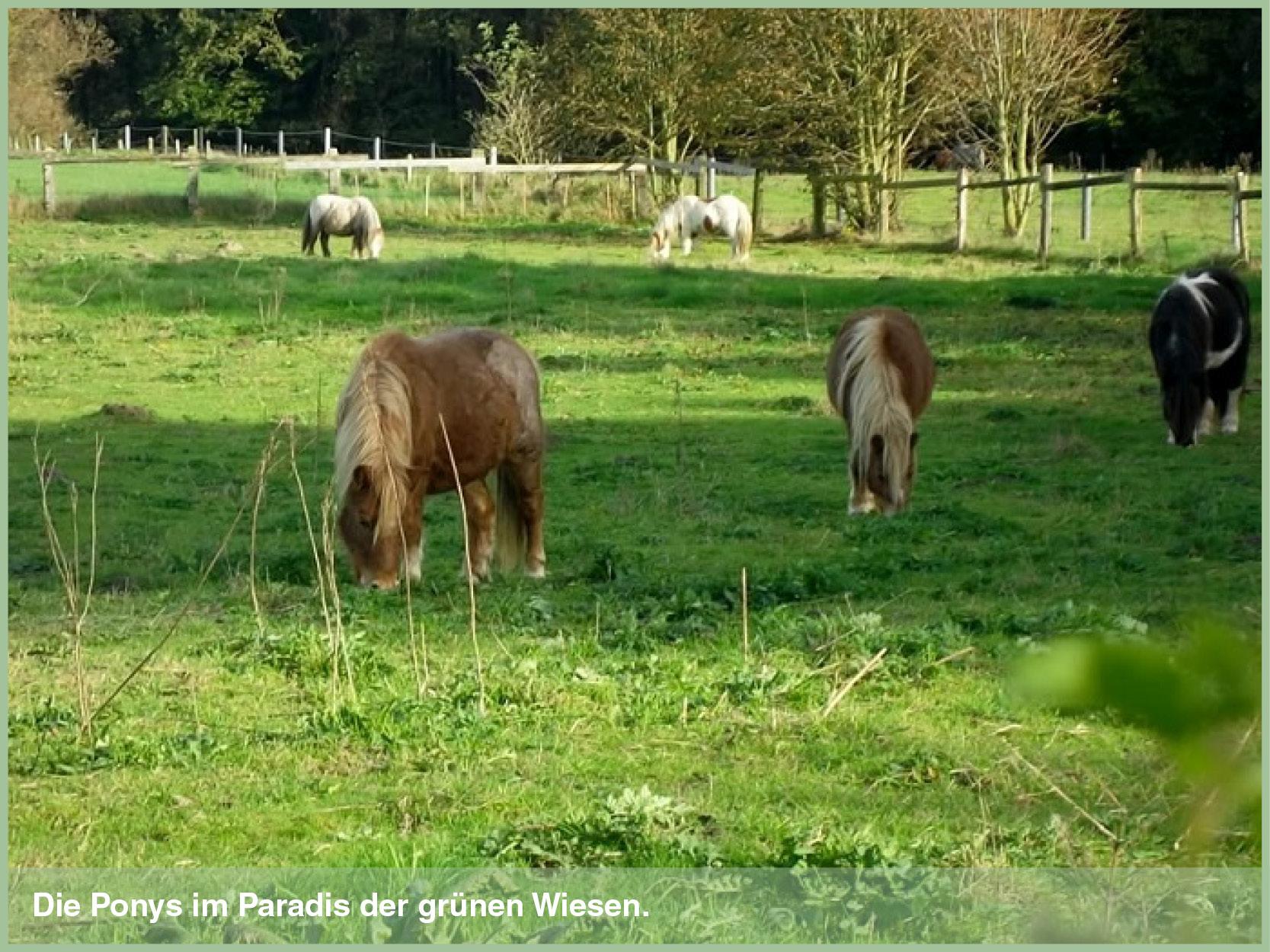 Ponys_