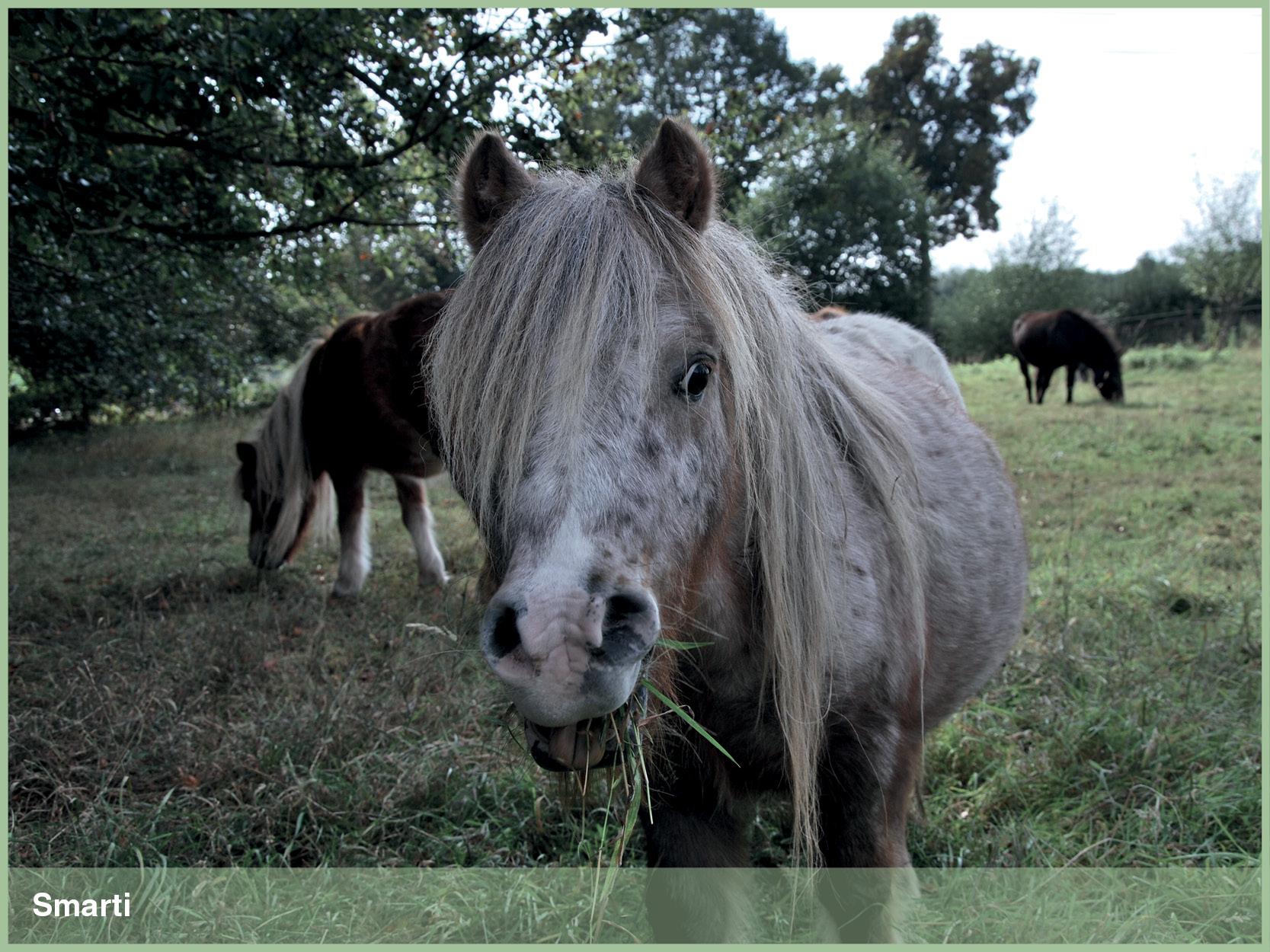Ponys_10