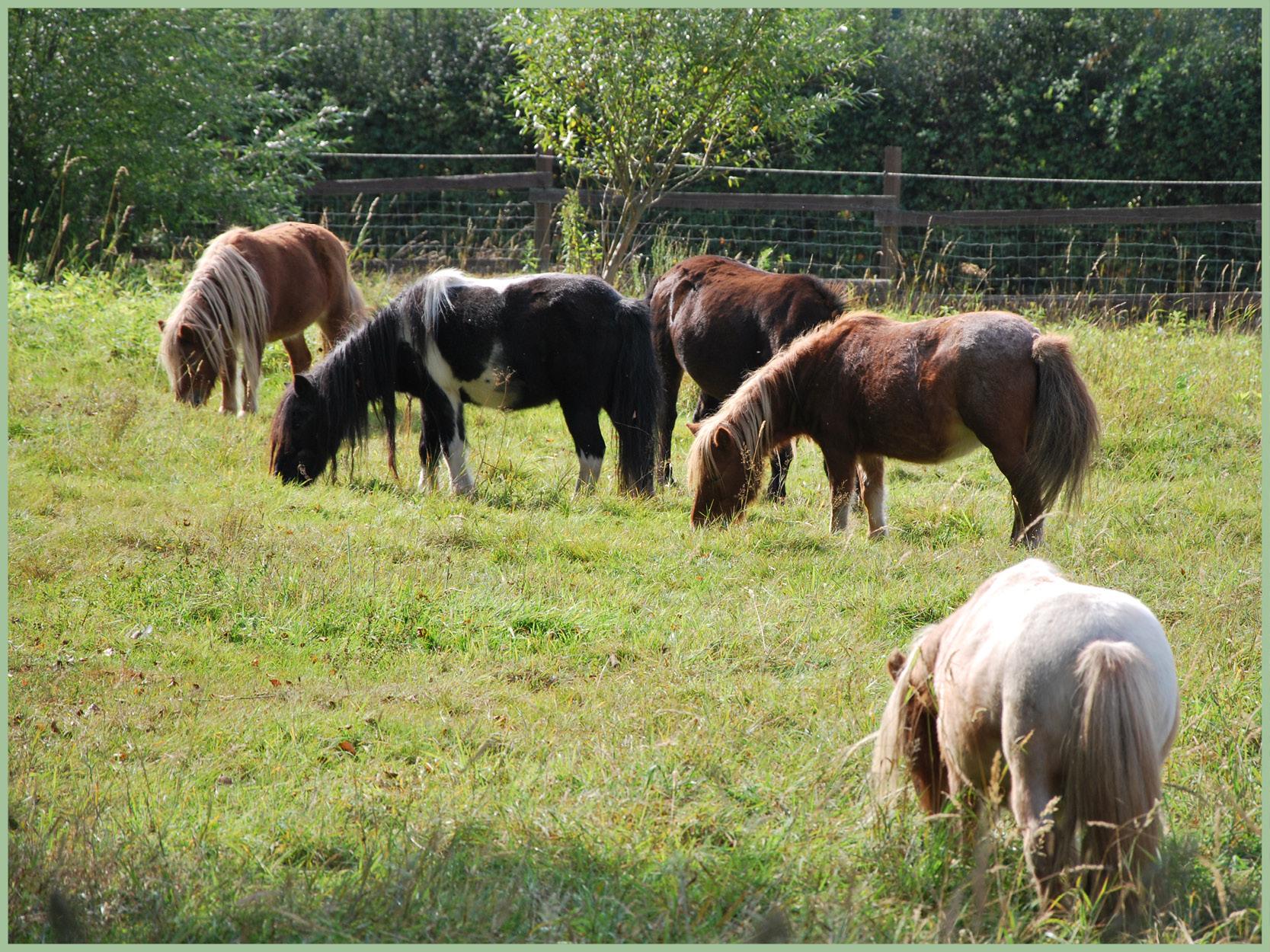Ponys_11