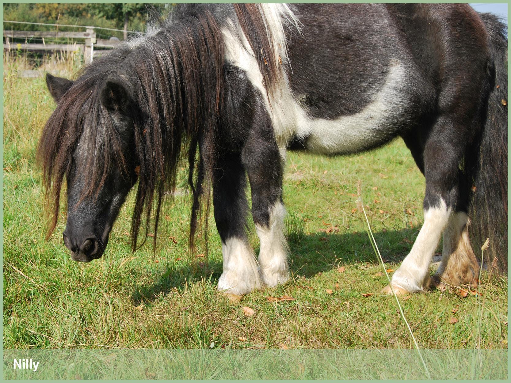 Ponys_12