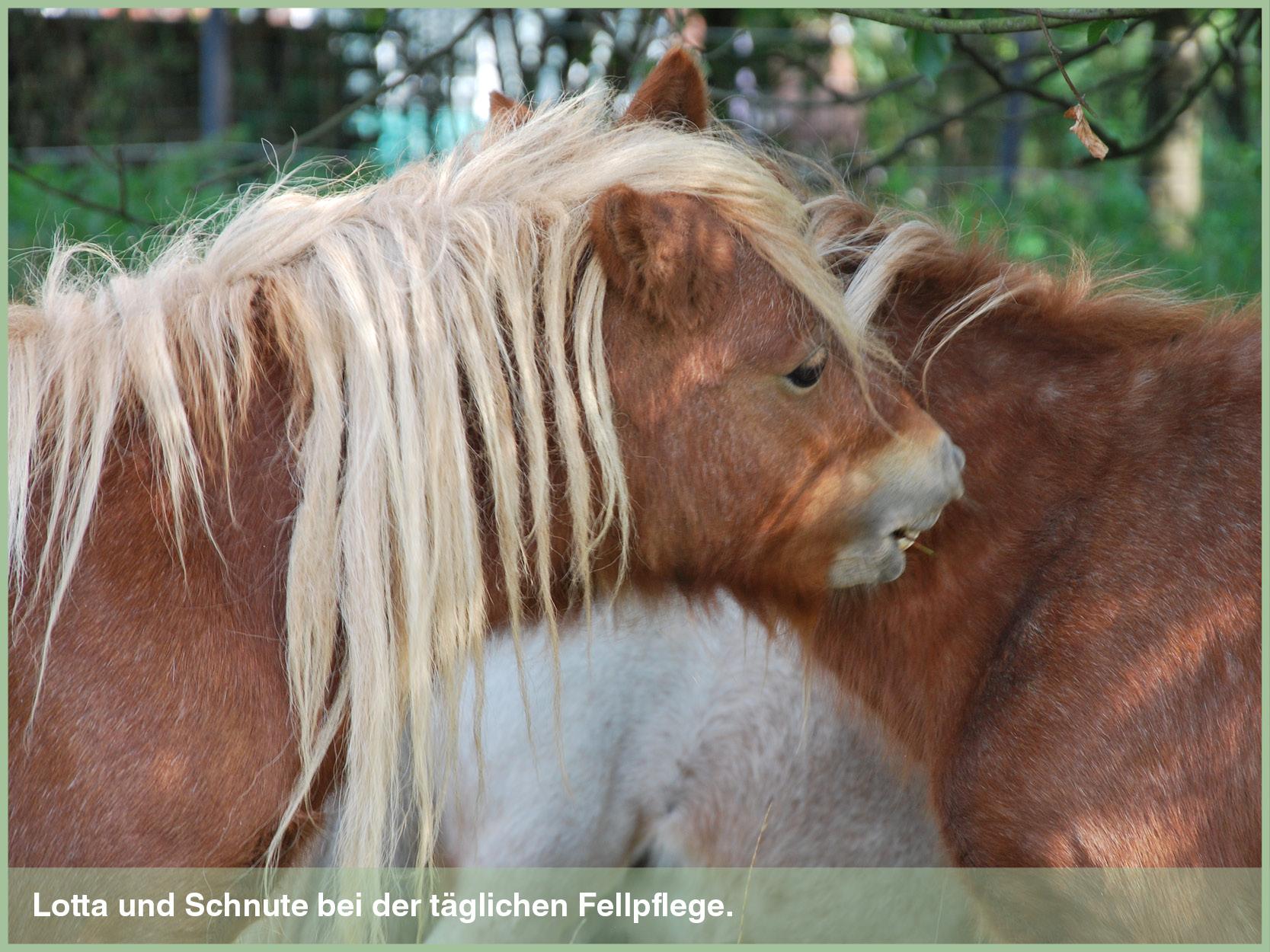 Ponys_13