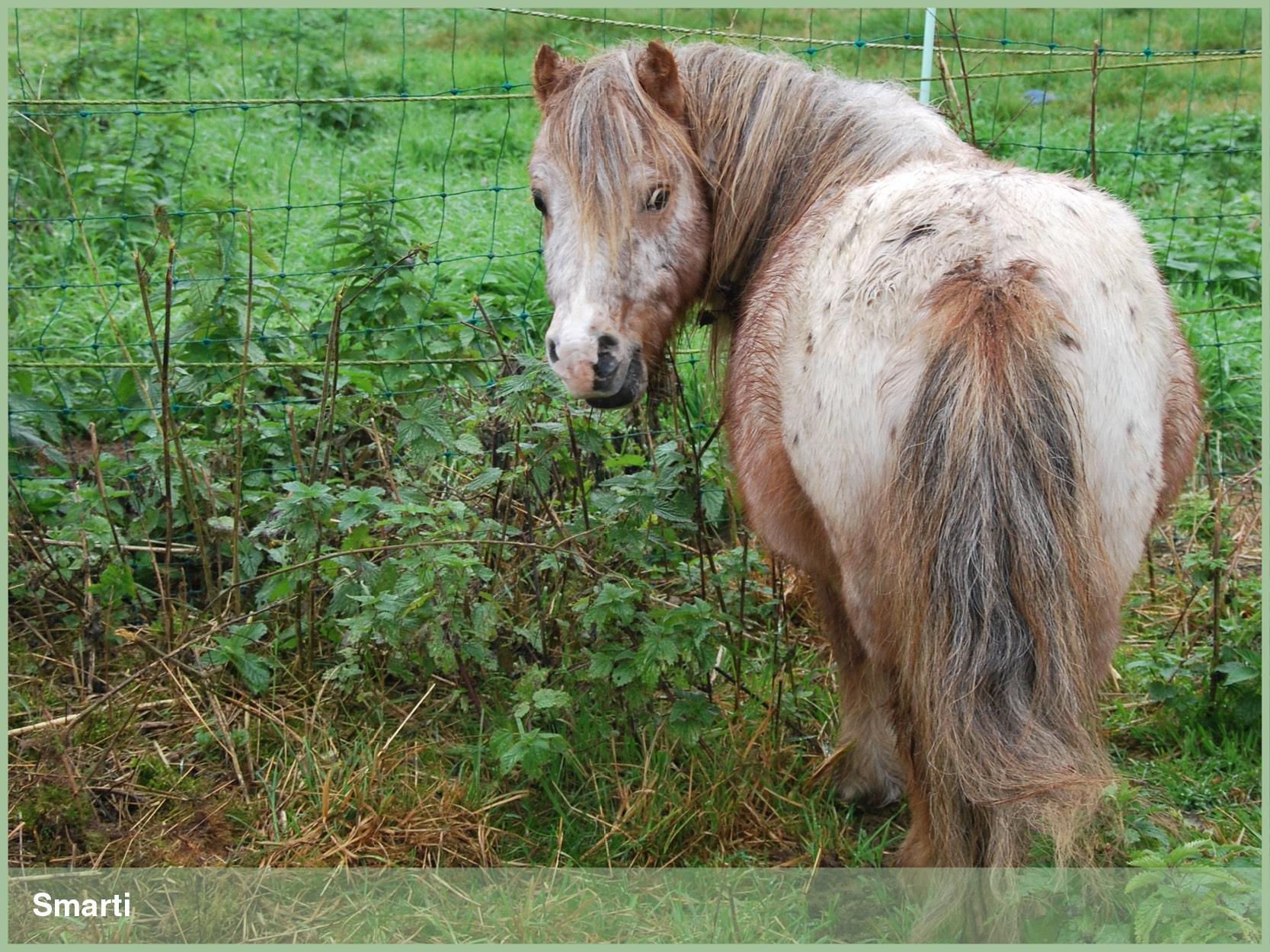 Ponys_15