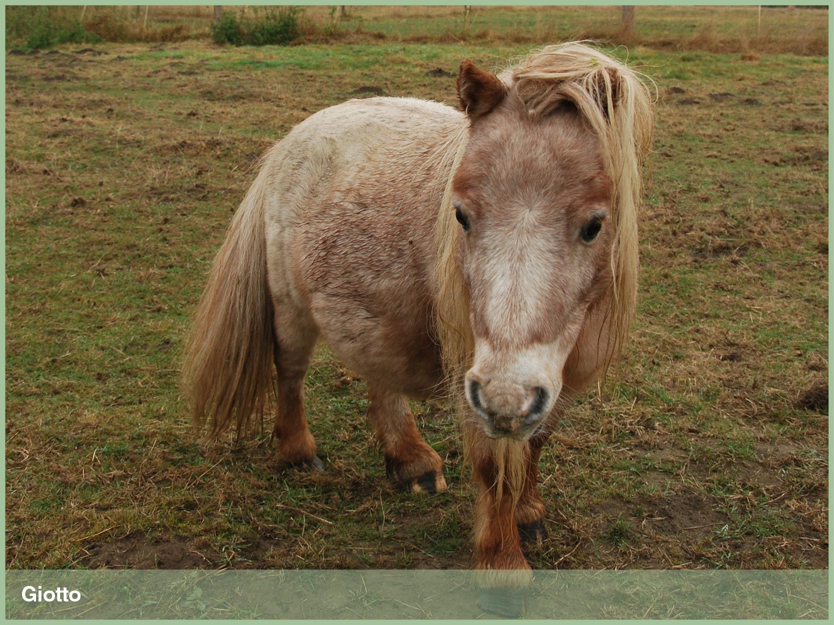 Ponys_16