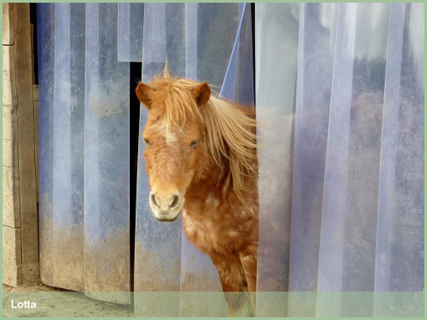 Ponys_2