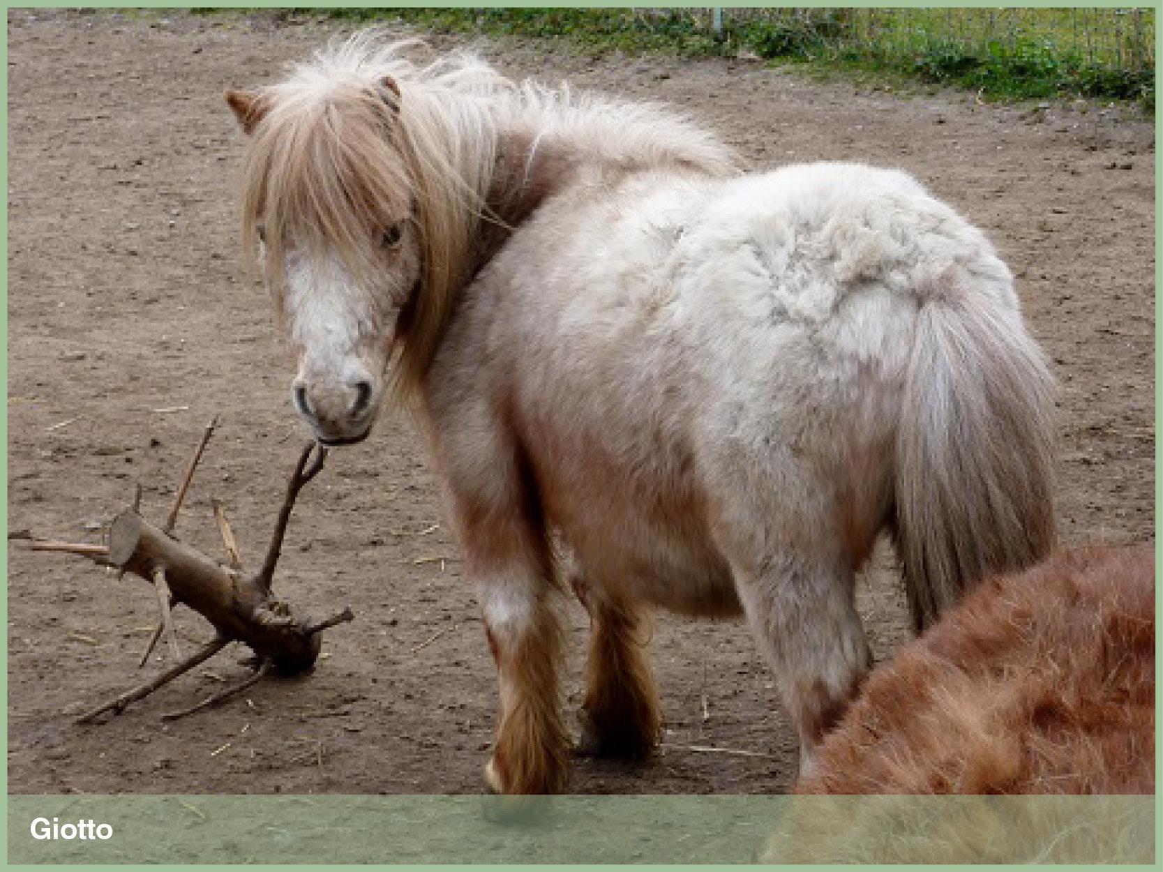Ponys_3