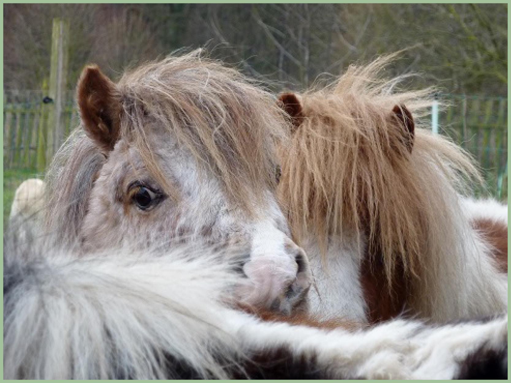 Ponys_4