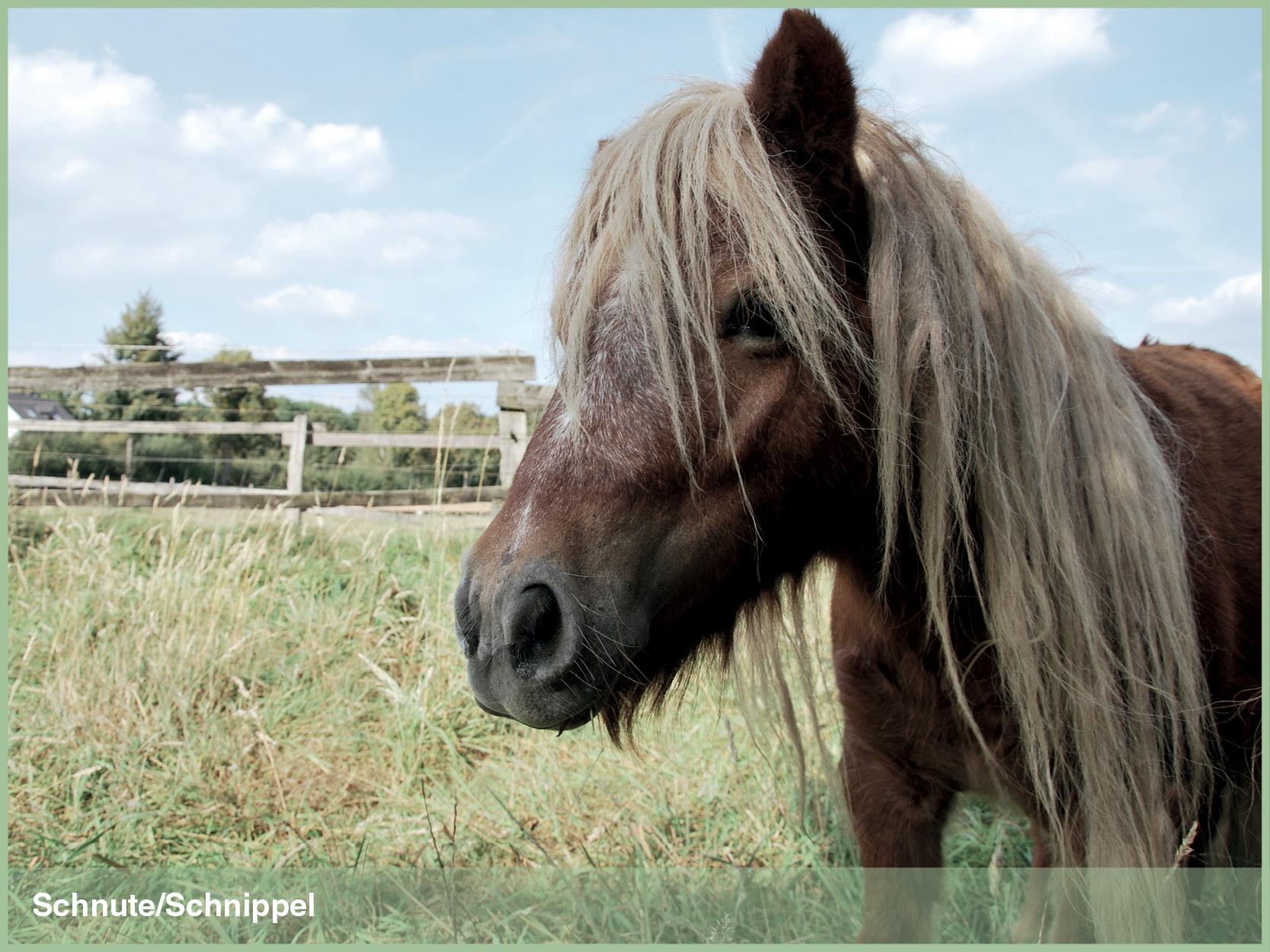 Ponys_8