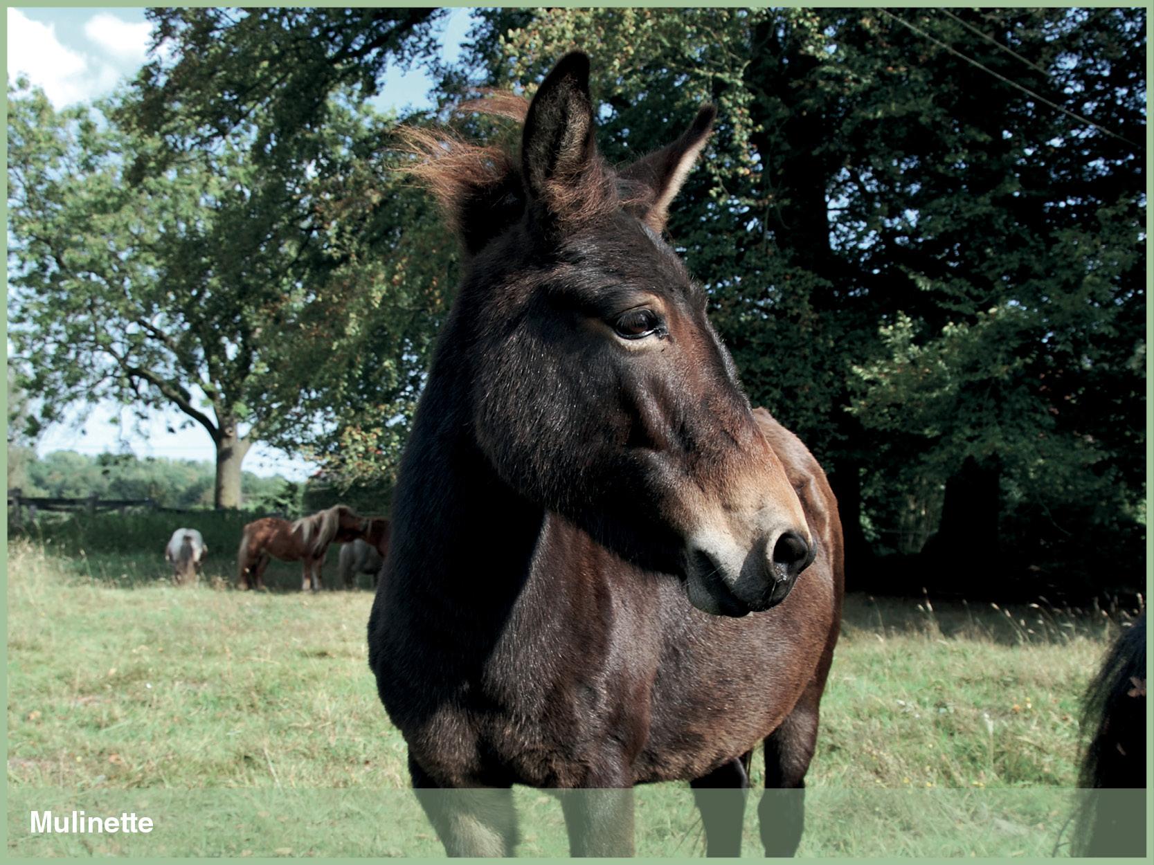 Ponys_9