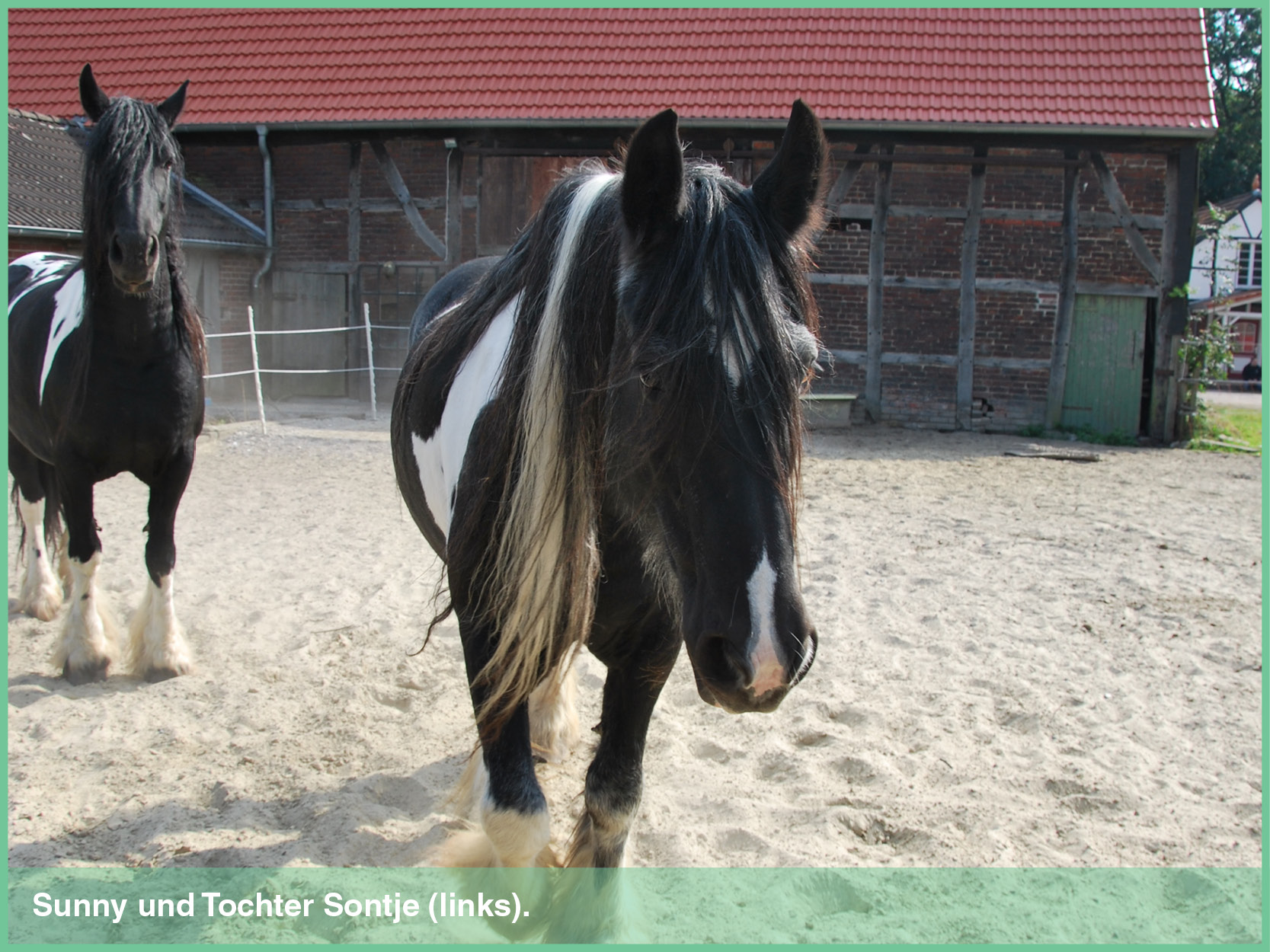 pferde_3