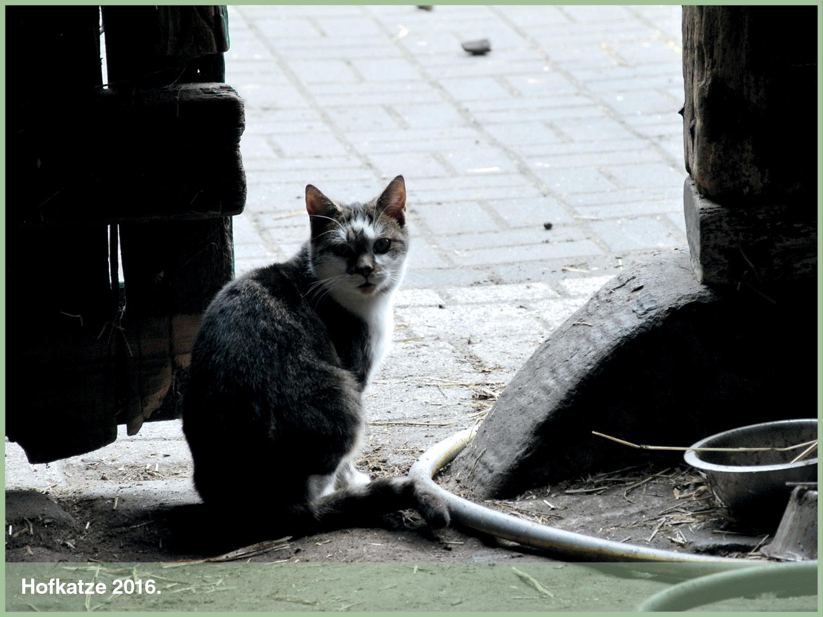 Katzen_3