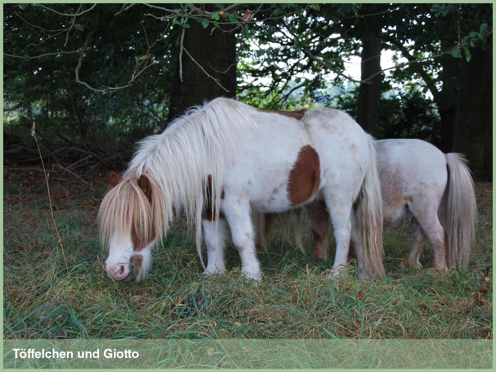 Ponys_14