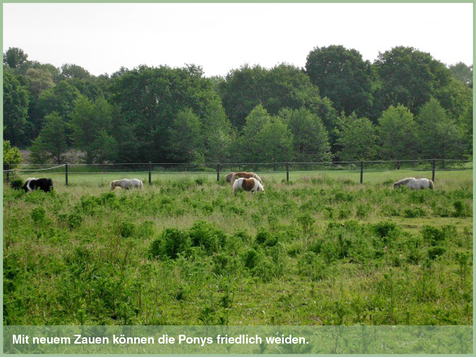 Ponys_5