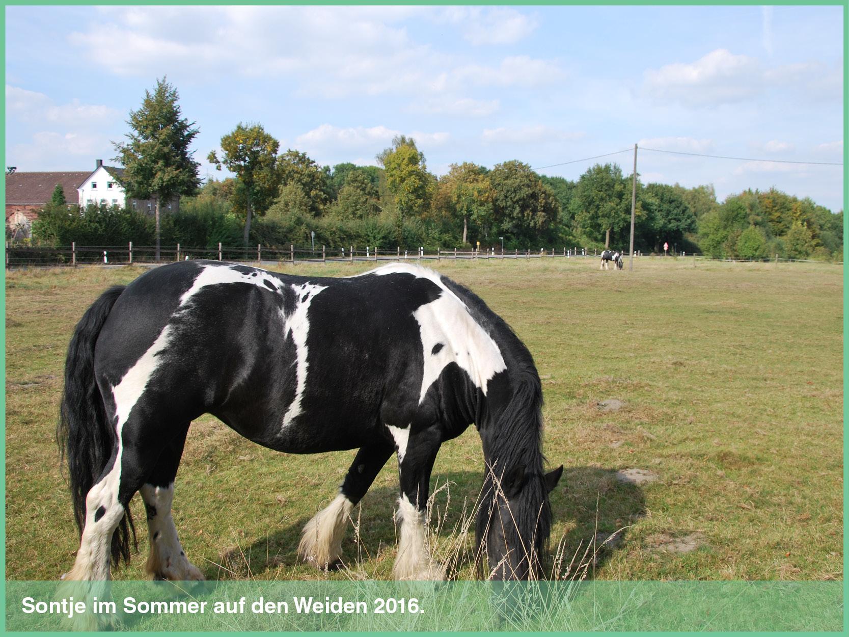 pferde_