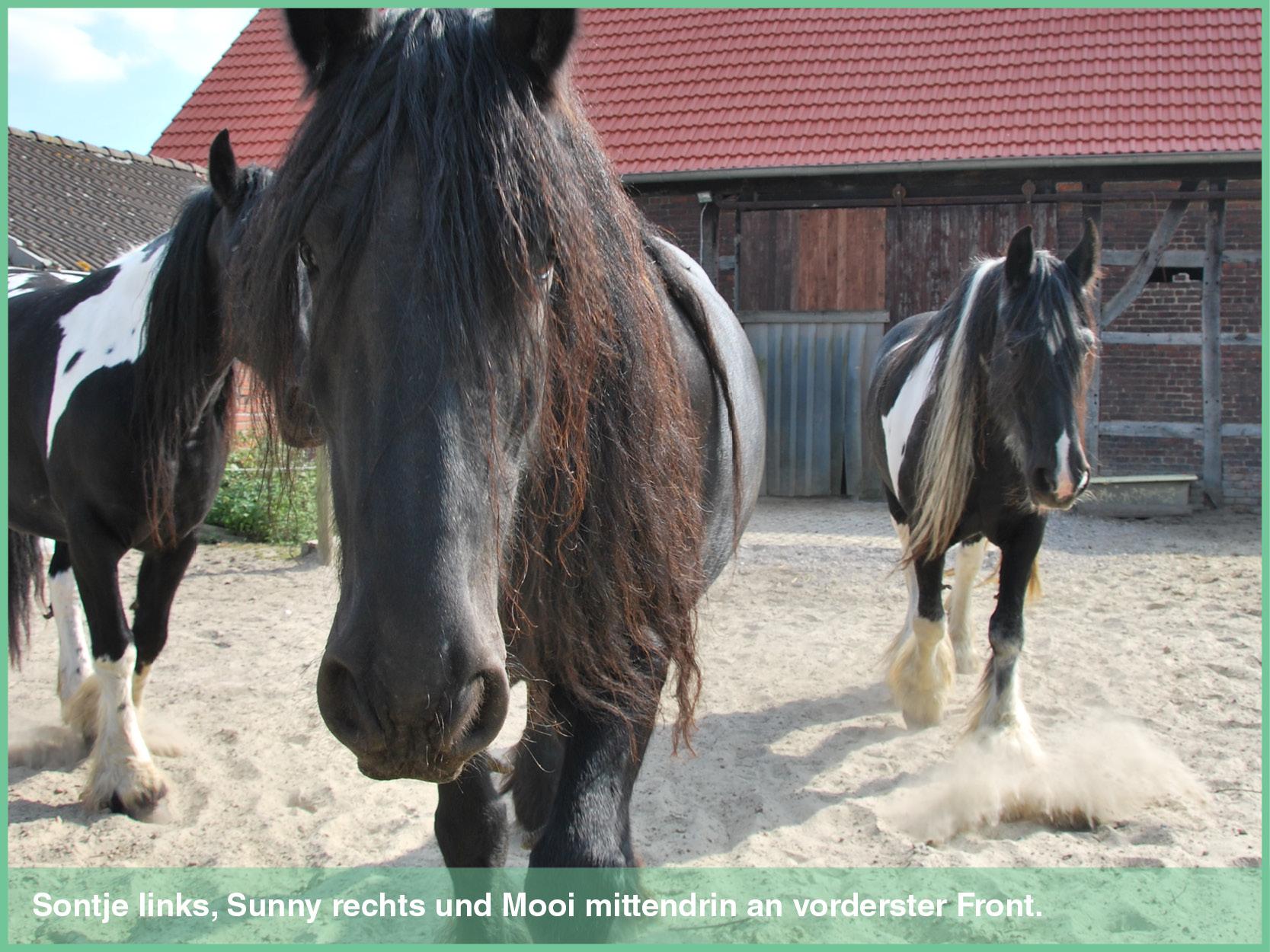 pferde_2