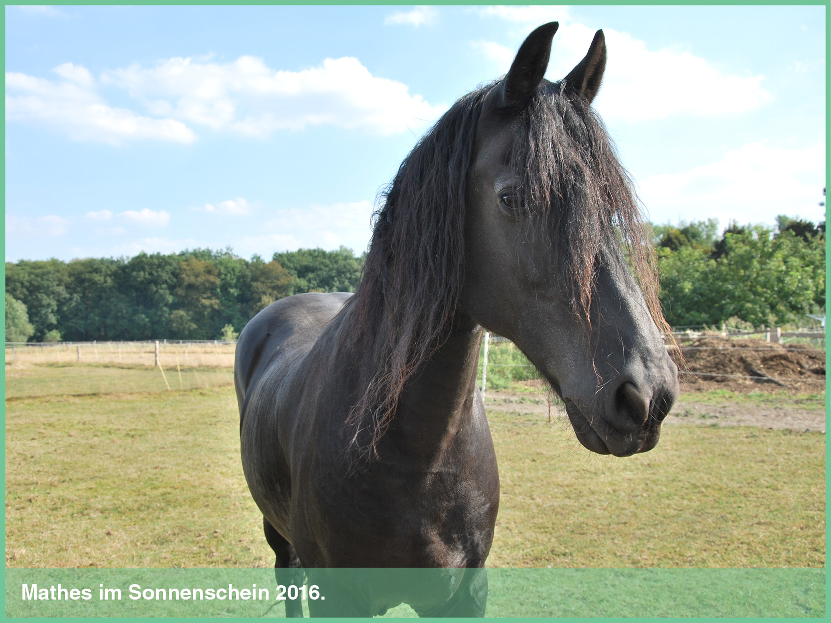 pferde_4