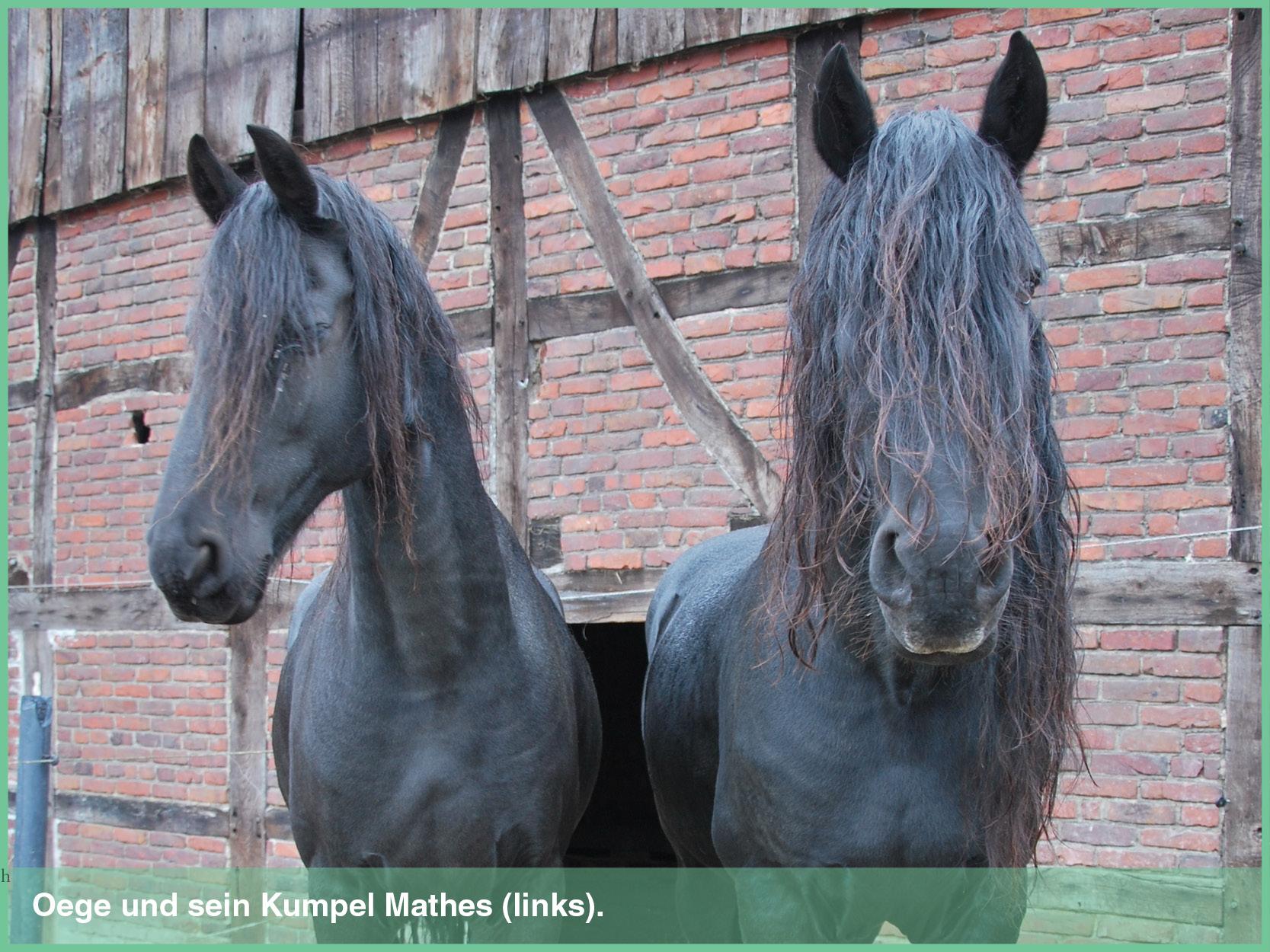 pferde_5