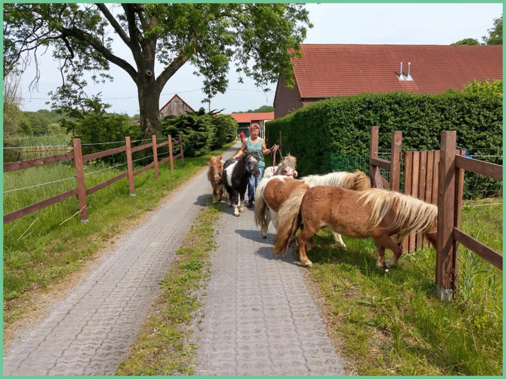 ponies_