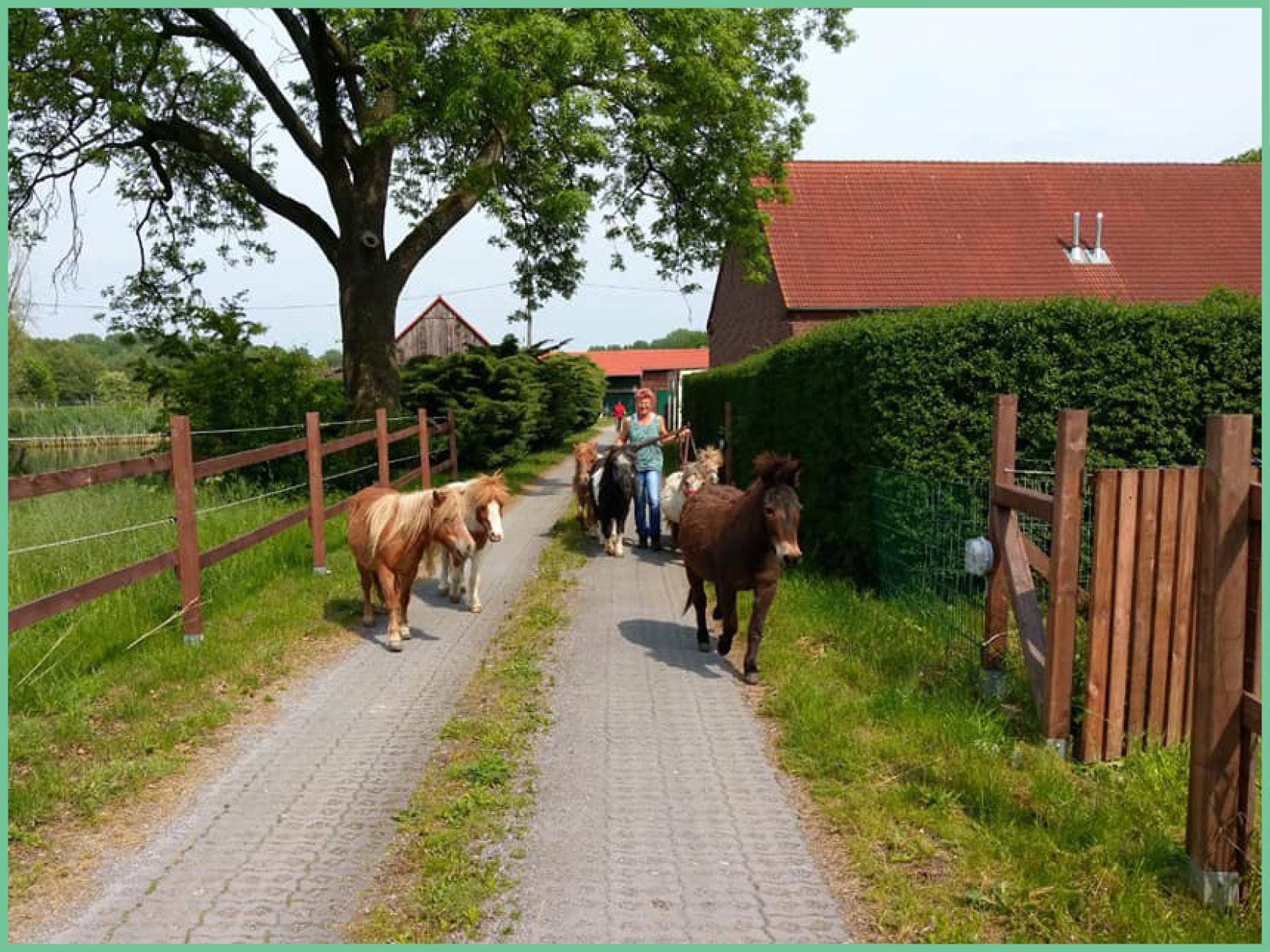ponies_2